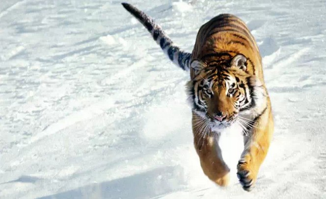 长白山森林:珍稀野生动物的天堂!