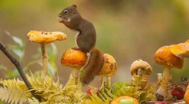 秋叶落了,动物都在干什么?惊艳了整个秋天!